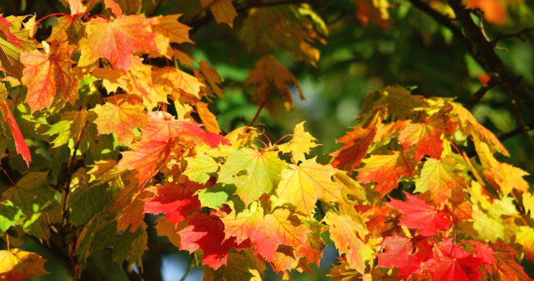 Høstens 5 beste råvarer